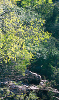 Trees reflecting in still water, Cazorla National Park, Jaen Province, Spain