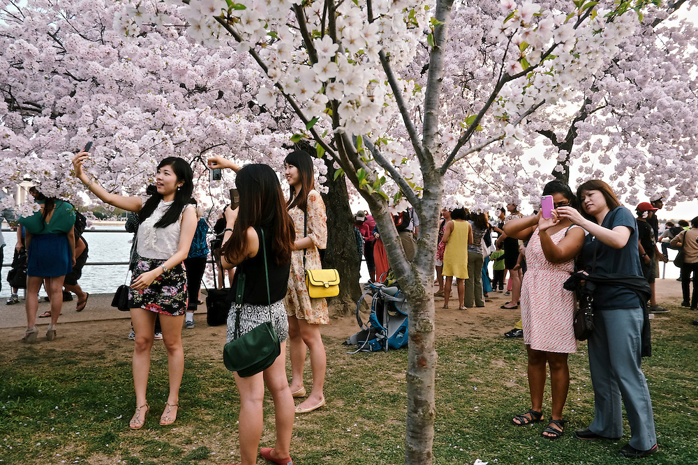 Tourists and residents tour the tidal basin to look at the Cherry Blossom trees in Washington DC.