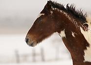 Horses in winter snow