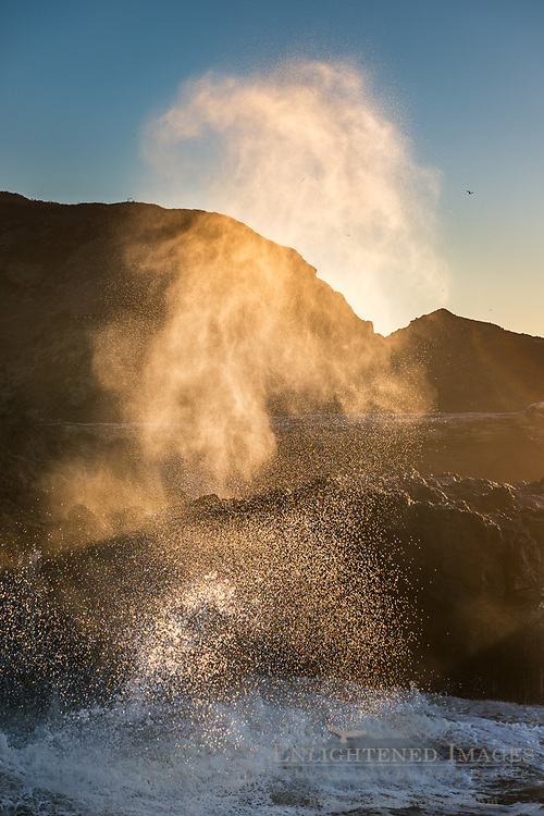 Mist and spray shooting out of the Spouting Horn at sunset, Cooks Chasm, Cape Perpetua Scenic Area, Siuslaw National Forest, Oregon Coast, Oregon
