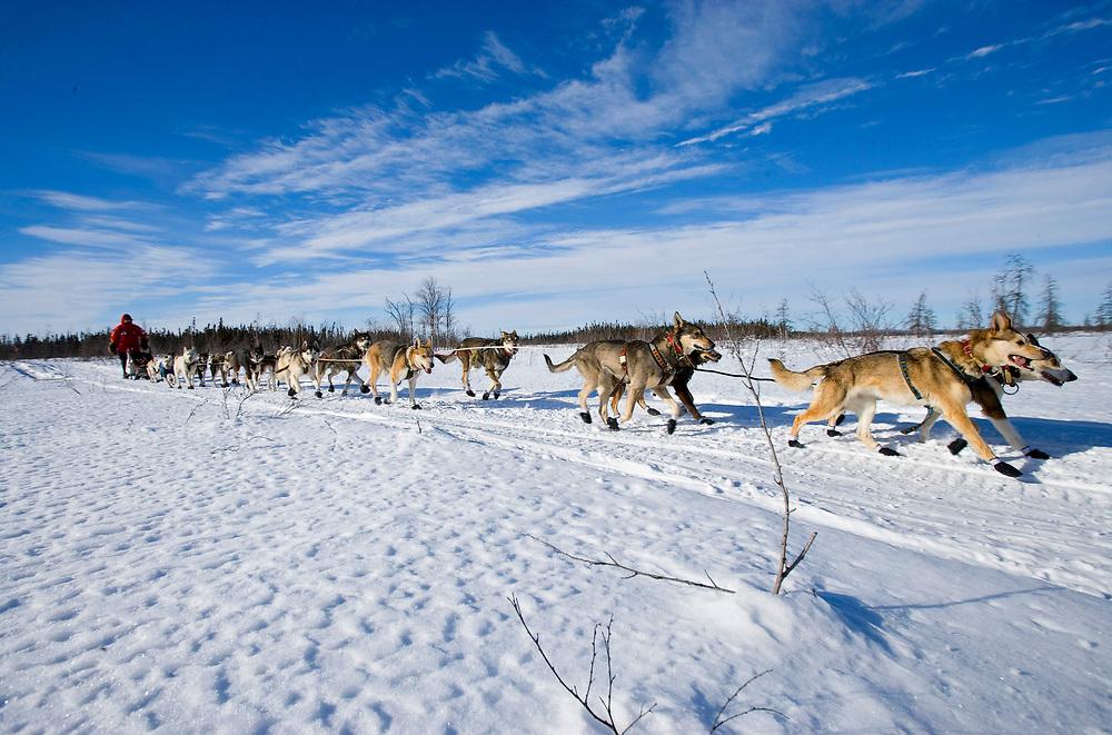 USA, Alaska, Musher and dog team races on snow-covered tundra about 15 miles east of Nikolai during 2005 Iditarod sled dog race