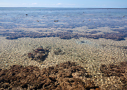 Shallow water pools on the top of Montgomery Reef as the tide falls. On a falling tide, the reef appears to rise from the ocean.  At 292km2, Montgomery is Australia's largest  inshore reef.