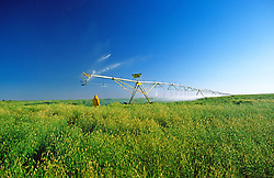 Farmer Irrigating  field Agriculture