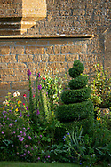 Spiral shaped box topiary in front of Lower Severalls Farmhouse,  Crewkerne, Somerset, UK