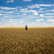 Eric Wolgemuth, a thirty-year harvesting veteran and land owner, walks through one of his wheat fields in Kimball, NE, July 13, 2017.