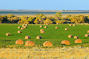 Bales at sunset<br /> Maple Creek<br /> Saskatchewan<br /> Canada