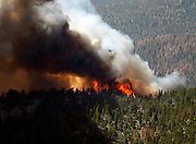 Fire rages through the forest in the High Park fire west of Fort Collins, Colorado June 19, 2012.  Eight more homes were lost in a Colorado  wildfire that is the state's most destructive on record and which  continued to rage dangerously close to a residential subdivision as  winds stoked the flames, fire officials said on Monday. REUTERS/Rick Wilking  (UNITED STATES)