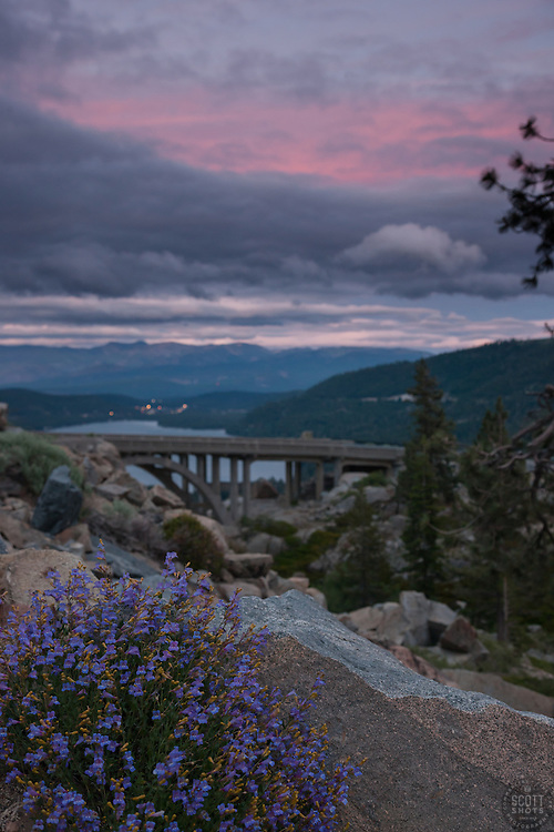 """Donner Lake Sunset 17"" - Photograph of penstemon wildflowers and Rainbow Bridge at sunset above Donner Lake in Truckee, California."
