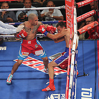 Miguel Cotto of Puerto Rico (left) knocks out  Delvin Rodriguez of the Dominican Rebublic square off during their 12-round super welterweight bout at the Amway Center in Orlando, Florida on Saturday, October 5, 2013. (Photo/Alex Menendez)