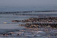Winters Wad | Wintry Wadden Sea