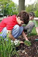 Matthew Bowser, 11 (left) and Jonathan Thomas plant flowers during a cleanup of the Victory Oak Knoll Memorial near the entrance of Dayton's Community Golf Course (at the edge of Kettering) by Boy Scout Troop 193, Saturday, May 7, 2011.