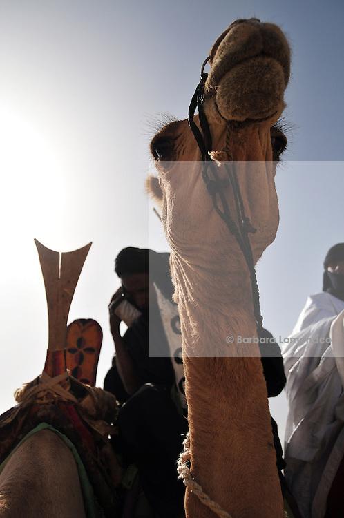 A Tuareg men speaks at his mobile phone on his camel. Festival au Désert 2011