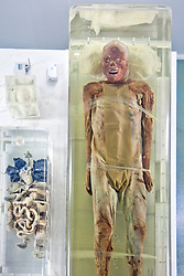 "2000-year old mummy ""Mr. Sui"", is the most popular exhibit at the Jingzhou Museum, Jingzhou, China. Tourism guides tend to refer to this mummy as a ""juicy body.""  The mummy is preserved in a hermetically sealed box, and visitors get a bird's-eye view from above.  Note that his intestines are on view in the container to the left. Jingzhou is a prefecture-level city in southern Hubei, China, located on the banks of the Yangtze River."