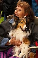 Spectator, collie dog, Miles City Bucking Horse Sale Parade, Montana