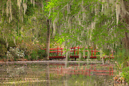 MAGNOLIA PLANTATION AND GARDENS,LANDSCAPE AND WATER,CHARLESTON,SO.CAROLINA