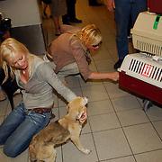 NLD/Amsterdam/20050702 - Bridget Maasland terug uit Bukarest met zwerfhonden die afgemaakt zouden worden, moeder