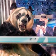 20170412 Aankomst panda's in Nederland
