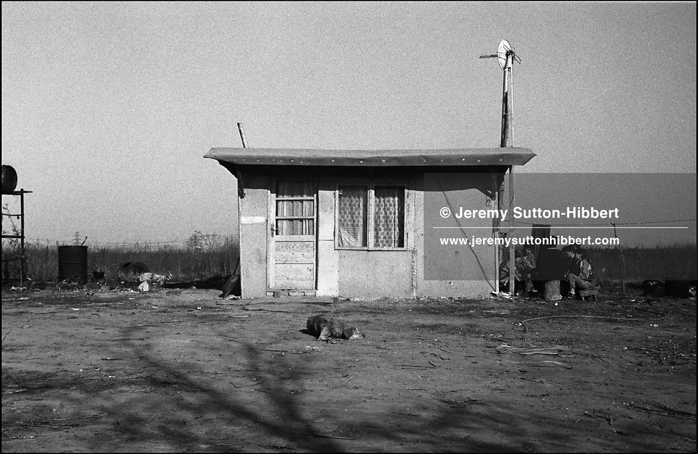 GAMBLING IN THE AFTERNOON. SINTESTI, ROMANIA. NOVEMBER 1996..©JEREMY SUTTON-HIBBERT 2000..TEL./FAX. +44-141-649-2912..TEL. +44-7831-138817.