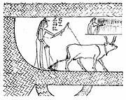 Nesitanebtashru ploughing and reaping. From 'The Greenfield Papyrus' (funerary papyrus of Princess Nesitanebtashru) c 970 BC