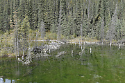 Beaver Lodge, dam, Pond, Canada