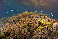 Guam soft corals and Sea Grasses