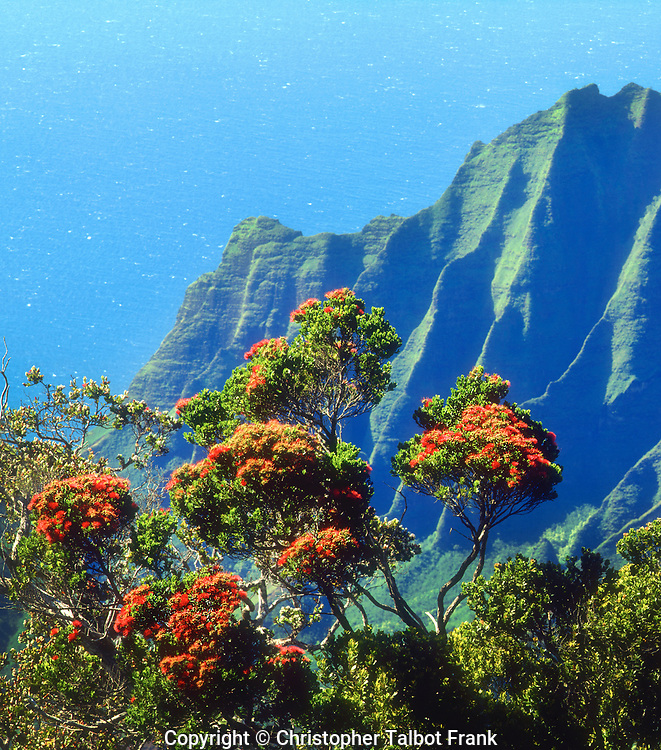 USA; Kauai; Hawaii.; A flowering tree above the Na Pali Coast
