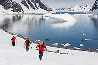 Hiking passengers from a cruiseship scale a snowfield enroute to a Gentoo Penguin colony along the Danco Coast, antarctic Peninsula, Antarctica.