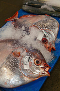 Opah, United Fish Auction, Honolulu, Oahu, Hawaii