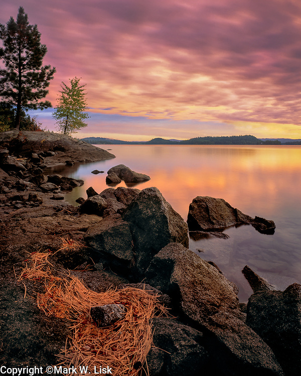 Pine needles washed to the north shore of Payette Lake decorate the shoreline.