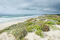 Vegetated coastal dunes and coastline during a passing cold front, De Mond Nature Reserve, Western Cape, South Africa