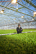 Queens, NY - November 18, 2016: A tour through the Gotham Greens greenhouse farm in Hollis.<br /> <br /> CREDIT: Clay Williams for Edible Queens.<br /> <br /> &copy; Clay Williams / claywilliamsphoto.com