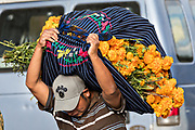 A man carries bundles of colorful marigold flowers on his back for the Day of the Dead festival at the flower market in Patzcuaro, Michoacan, Mexico.  The festival has been celebrated since the Aztec empire celebrates ancestors and deceased loved ones.