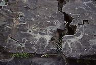 Mongolia. petroglyphs in Tamir sum  Bayantsagaan Valley      / Petroglyphes  sur les rochers à Quruu Uzuur. ( Mongolie). ( IK TAMIR  Bayantsagaan Valley) A la recherche de petroglyphes. L'equipe de chercheurs et de personnalites scientifiques de l'Expedition  - Routes des Nomades -  de l'U.N.E.S.C.O. se met activement à la recherche de petroglyphes sur les rochers à QURUU UZUUR. (Au confluent des rivières IK TAMIR et BAYANSTAGAAN. Sum de IK TAMIR dans l'aymag de ARQANGAY,  / /111    L920725a  /  P0007322