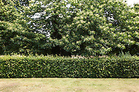 View of hedge and trees in park