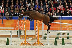 284 - Excentriek<br /> KWPN Hengstenkeuring - 's Hertogenbosch 2012<br /> © Hippo Foto - Leanjo de Koster
