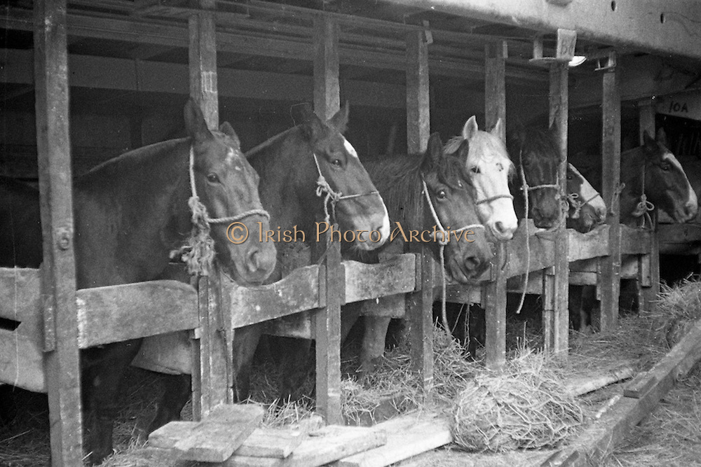 """16/01/1960<br /> 01/16/1960<br /> 16 January 1960<br /> Horses for slaughter being loaded for export to the Netherlands from Dublin. Horses in the cargo hold of the """"Theano""""."""