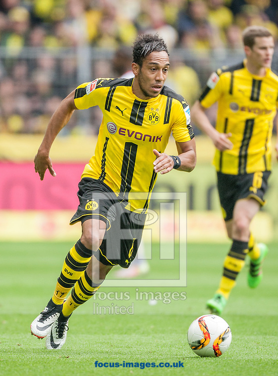 Pierre-Emerick Aubameyang of Borussia Dortmund during the Bundesliga match at Signal Iduna Park, Dortmund<br /> Picture by EXPA Pictures/Focus Images Ltd 07814482222<br /> 14/05/2016<br /> ***UK &amp; IRELAND ONLY***<br /> EXPA-EIB-160515-0073.jpg