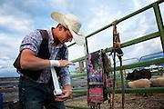 Bronc Rider Taping Wrist, Montana