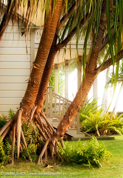 Palm trees by Hawaii cottage