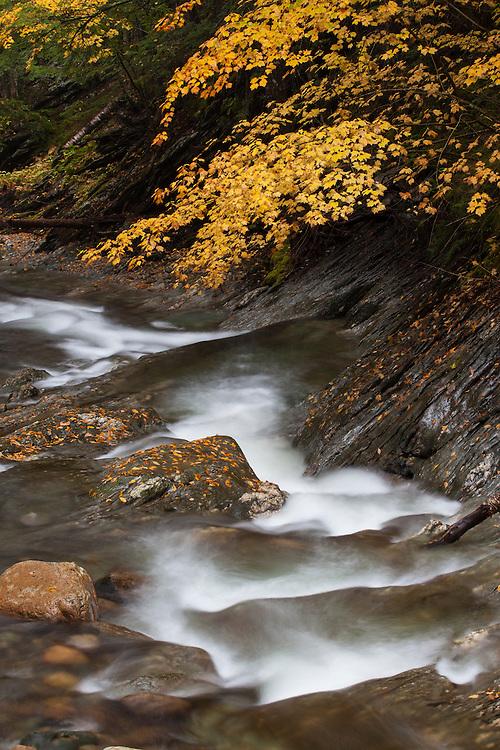 Peak color along the stream, Texas Falls State Park, Hancock, Vermont