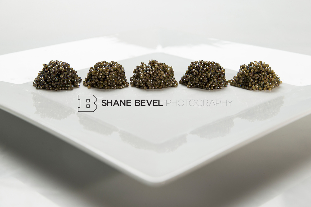 4/21/15 10:33:47 AM -- Technical comparison between samples 1, 7, 10, 12, 3 (left to right). Paddlefish Caviar for the Oklahoma Department of Wildlife Conservation. <br /> <br /> Photo by Shane Bevel