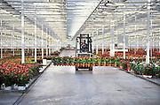 Nederland, Huissen, 10-12-2011Een hypermoderne kas in het kassen gebied Bergerden. Hier worden alleen Anthuriums gekweekt.Foto: Flip Franssen/Hollandse Hoogte