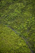 Rainforest, Kauai, Hawaii