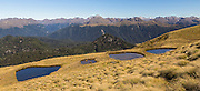 Golden tussock and tarns along the Borland track to Mount Burns