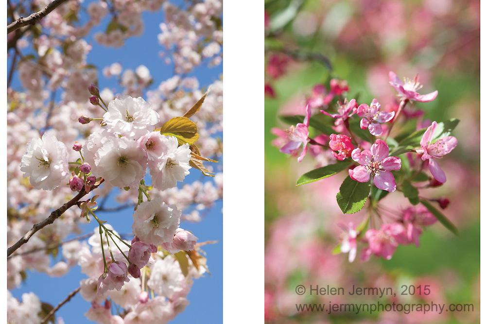 Spring blossom, Kew Gardens, Kew