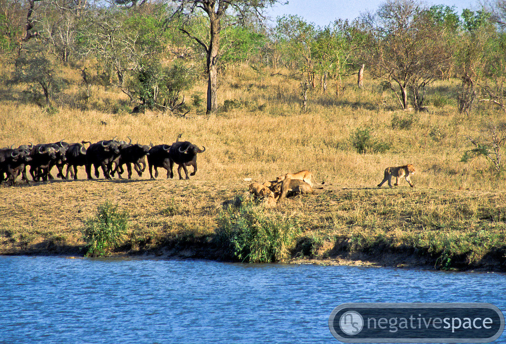 Battle at Kruger No. 15