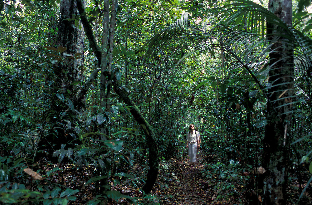 Tropical Forest along Rio Negro near Manaus, Amazonia, Brazil