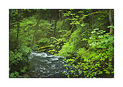 Whatcom Creek, Bellingham Washington