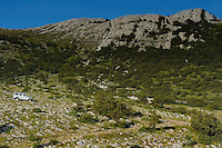 Safari tour operator Velebit Photo Safaris,Paklenica National Park, Velebit Nature Park, Rewilding Europe rewilding area, Velebit  mountains, Croatia