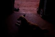 Iturama_MG, 14 de Maio de 2007...Cachorro em uma casa na beira de estrada na rodovia MG 255, Minas Gerais...A a dog in the house near to MG 255 highway, Minas Gerais...Foto: LEO DRUMOND / NITRO
